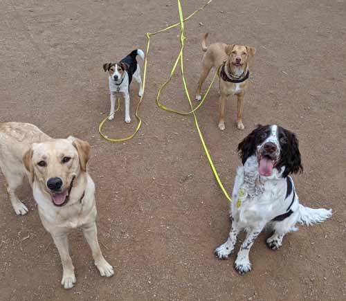 groupe de chiens pertant en détente