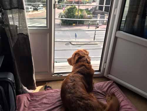 Nyoko à la fenêtre