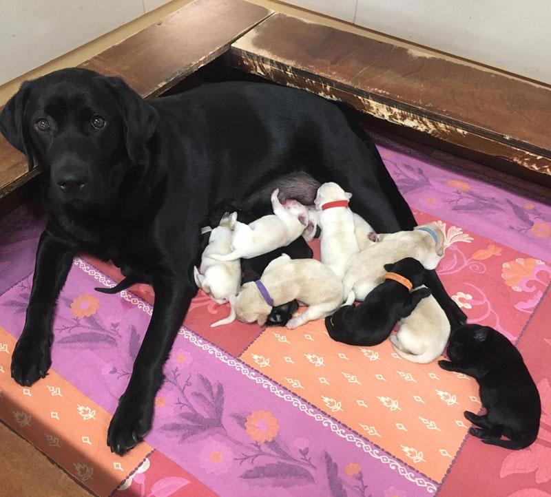 Noya et ses chiots, première semaine